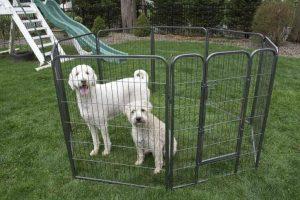 recinto cane