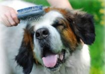Brushing Your Dog