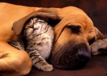How Cats and Dogs Can Get Along in the Same Home